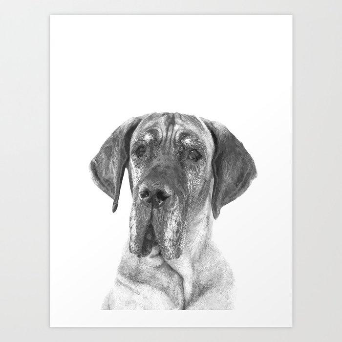 Black and White Great Dane Art Print