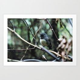 Morning bird (Stewart Island, New Zealand) Art Print