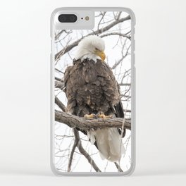 Bald Eagle on a branch Clear iPhone Case