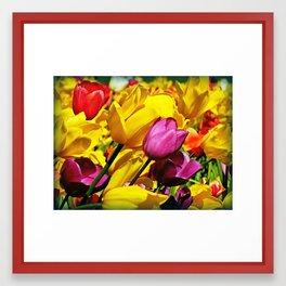 Blowing Tulips Framed Art Print