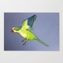 Monk Parakeet in Flight Canvas Print
