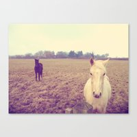 horses Canvas Prints featuring Horses by Rebecca Mcmillan