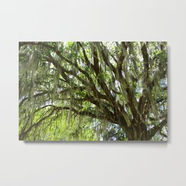 Live Oak in Springtime Metal Print