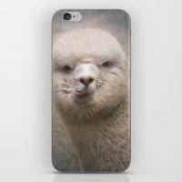 alpaca iPhone & iPod Skins featuring Alpaca! by Pauline Fowler ( Polly470 )