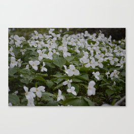 Patch of Trilliums Canvas Print