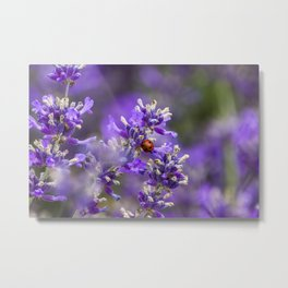 Ladybug on Lavender Metal Print