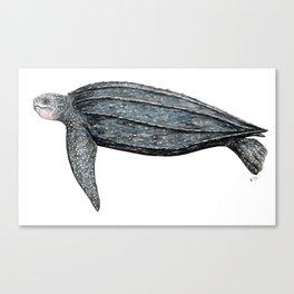 Leatherback turtle (Dermochelys coriacea) Canvas Print