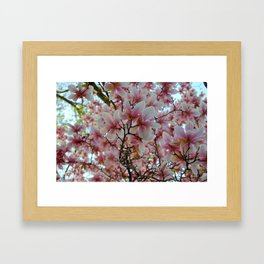 Magnolia Spring Framed Art Print