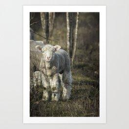 Winter Lamb Art Print