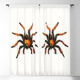 Halloween Spider Blackout Curtain