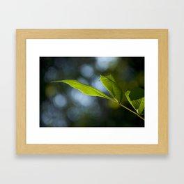 Grows Slippery Leaves Framed Art Print