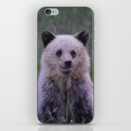 The most adorable grizzly bear cub in Jasper National Park | Canada iPhone Skin