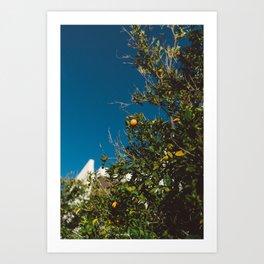 California Orange Tree Art Print
