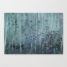 Barely Canvas Print