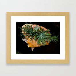 A Shell's Rebirth Framed Art Print