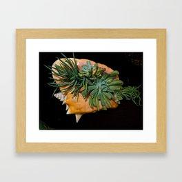 A Shell's Rebirth Framed Art Print