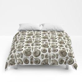 Ernst Haeckel Ammonitida Ammonite Comforters