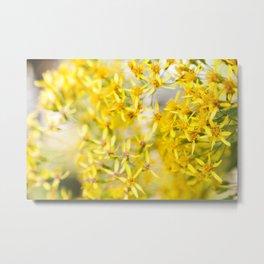 Sunshine & Flowers Metal Print