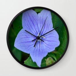 Platycodon Grandiflorus aka. Ballon Flower Wall Clock