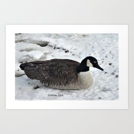 Canadian Beauty Art Print