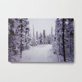 Snowy Path Metal Print