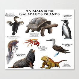 Animals of the Galapagos Islands Canvas Print