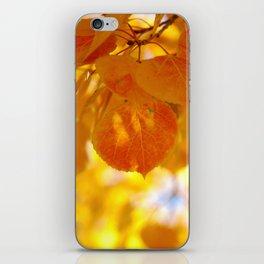 Sunlight through autumn aspen leaves iPhone Skin