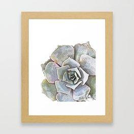 Succulent N.3 Framed Art Print