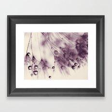 dandelion aubergine Framed Art Print