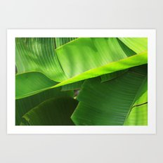 Green Leaves. Art Print