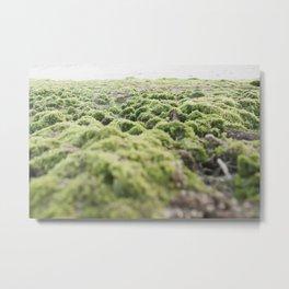 Hidden Gems of Low Tide Metal Print