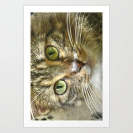 Mellow and Observant - Grey Fat Cat - Jose favorite Art Print