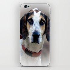 Hound 2 iPhone & iPod Skin