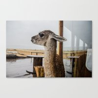 lama Canvas Prints featuring Lama by miloezger