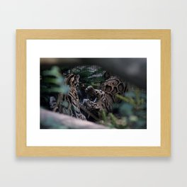 Playful Framed Art Print