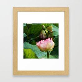 The Lotus Framed Art Print