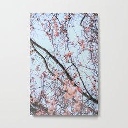Early Blossom Metal Print