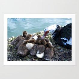 Baby ducks at the shore of the lake Art Print