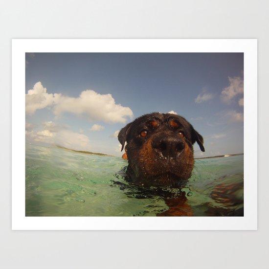 Oso swimming Art Print