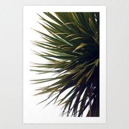 Palm Tree II Art Print