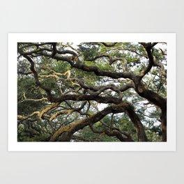 Live Oak Tree Art Print