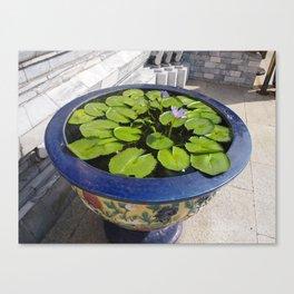 Lotus Canvas Print