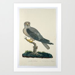 Grijze wouw (Elanus caeruleus) op een boomstronk, attributed to Robert Jacob Gordon, 1777 - 1786 Art Print