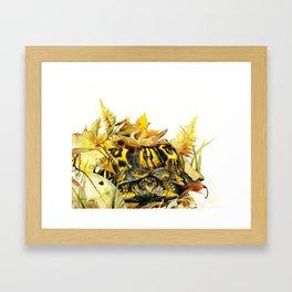 Eastern Box Turtle Framed Art Print