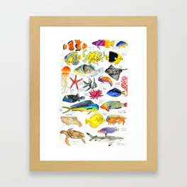 Pen and Ink Watercolored Fish Species Chart Framed Art Print