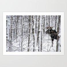 Glimpse of Bull Moose Art Print