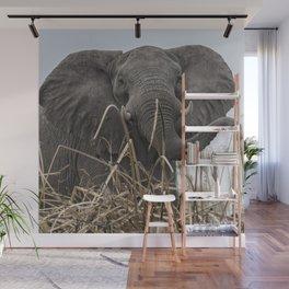 Elephant Along the Okavango River Wall Mural