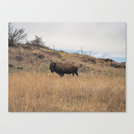 Stand Steady Canvas Print