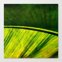 banana leaf Canvas Prints featuring Banana leaf by helsch photography