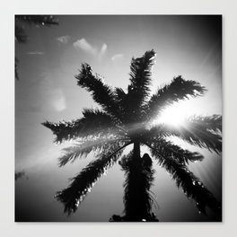 Palm Tree in Maui in Black and White Canvas Print